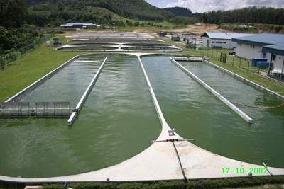 A DXN mesterséges alga-tavai