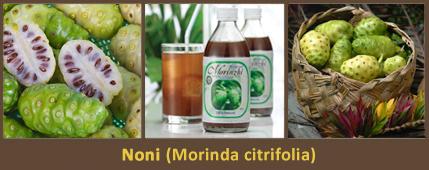 Noni, (Morinda citrifolia). Az ázsiai adaptogén gyümölcs