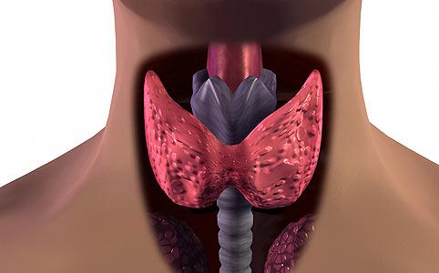 Pajzsmirigy betegség – hogyan segíthetnek a gyógygombák?