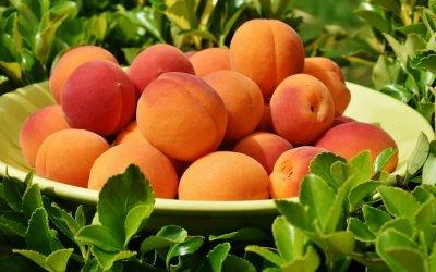 Mit érdemes tudni a B4 vitaminról?